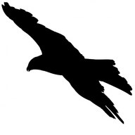 dotNet falcon icon